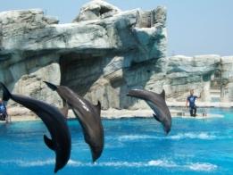 Delfini di Oltremare